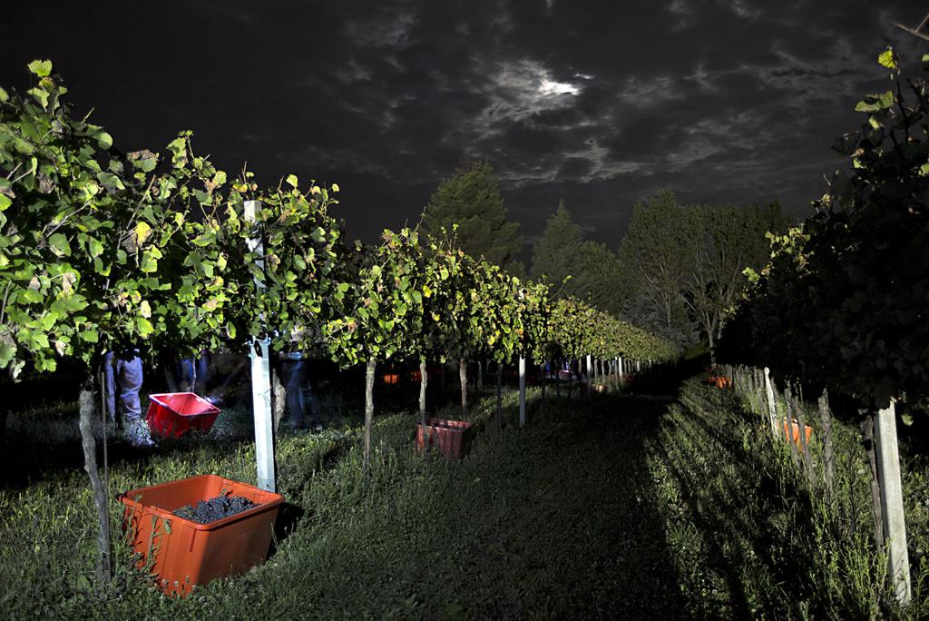 Vendemmia-notturna-Cantina-Cenci-2014-2